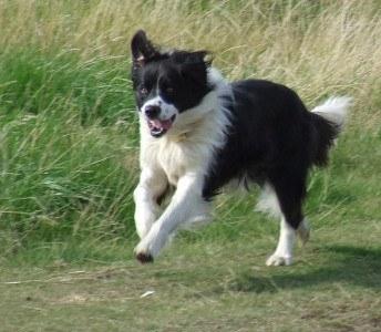 Watch Out For Heatstroke In Dogs