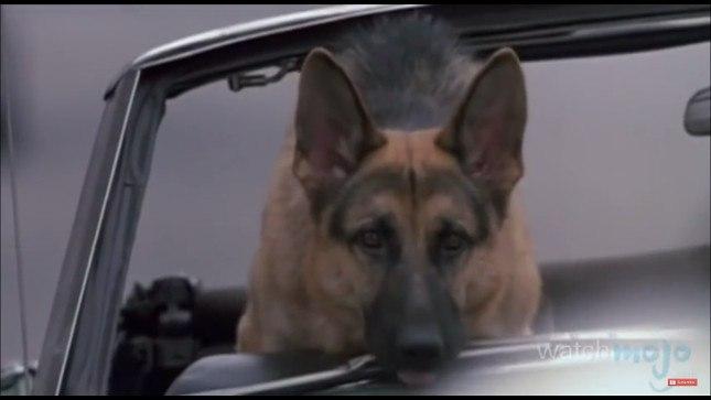 top-10-dog-breeds-german-shepherd-dog