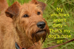 Quotes About Dogs