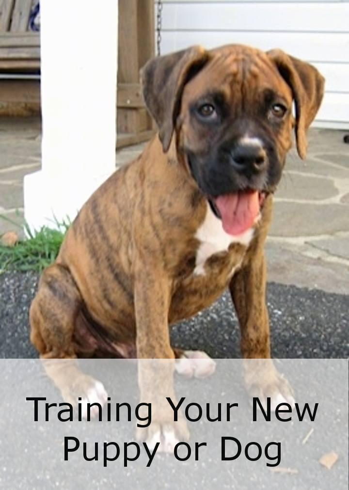 Training Your New Puppy Or Dog