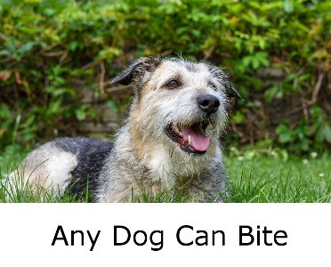 Any Dog Can Bite - Causes And What To Do