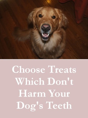 Choose Healthy Dog Treats Which Don't Harm Their Teeth