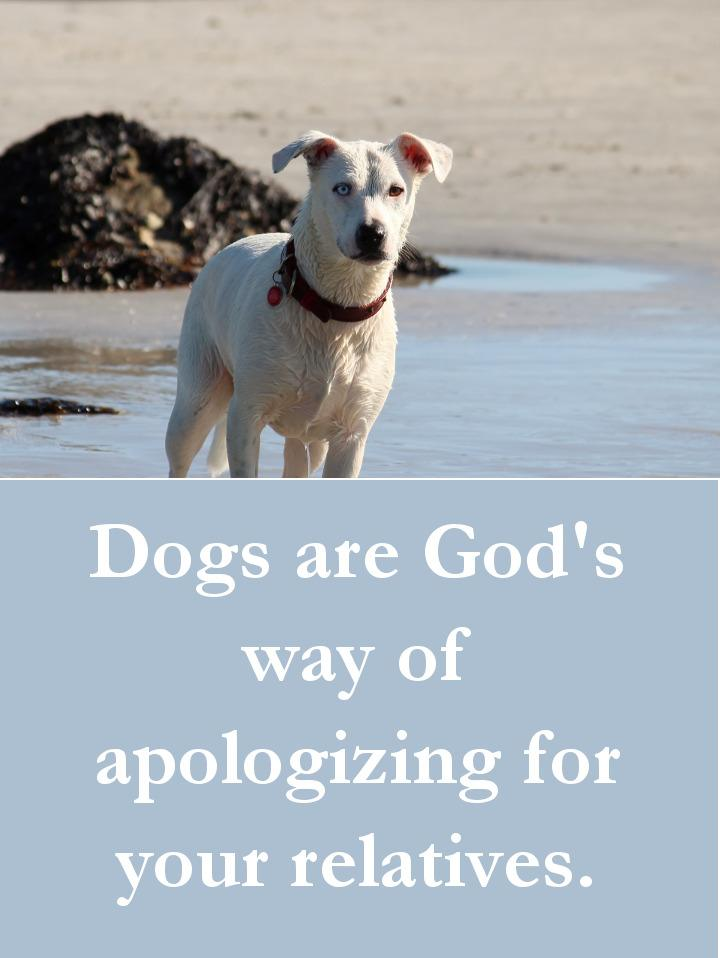 27 Beautiful Dog Quotes – Some Touching, Some Poignant & Some Funny