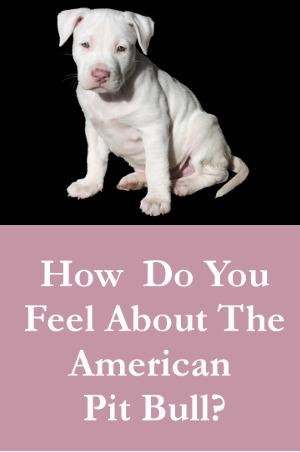 How Do You Feel About The American Pit Bull Terrier?