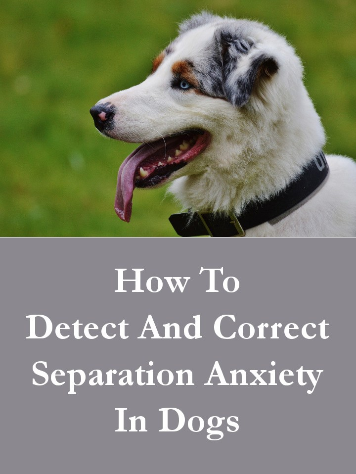 How to Detect And Correct Separation Anxiety In Dogs