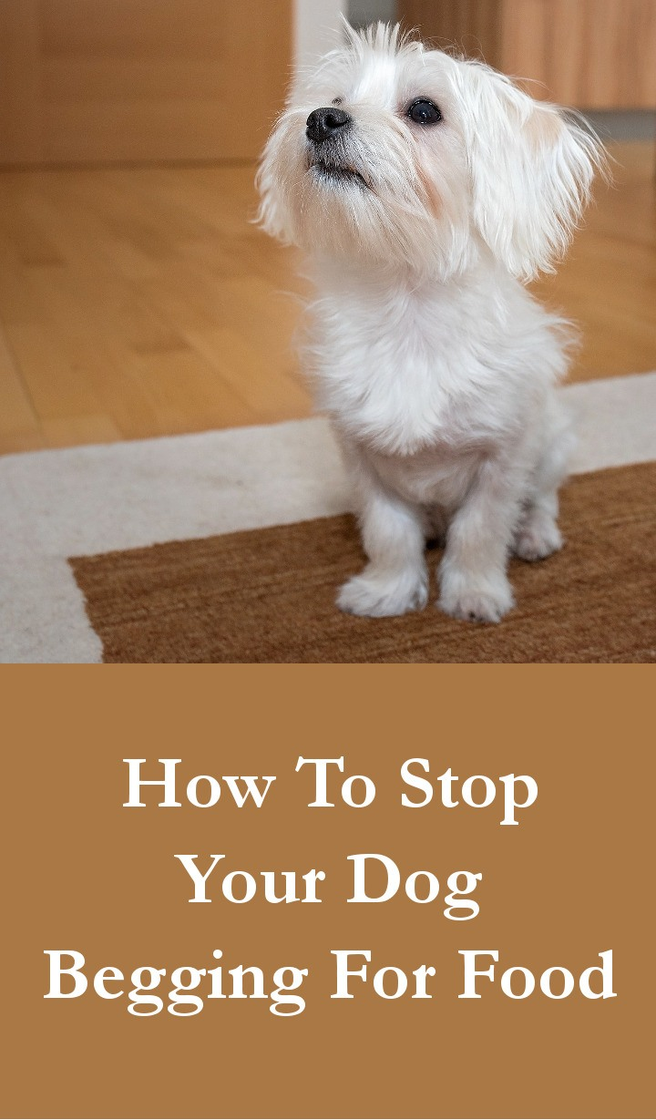 How To Stop Your Dog Begging For Food
