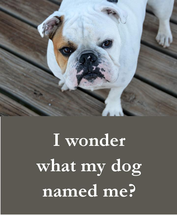 Dog Quotes - I wonder what my dog named me