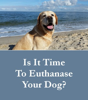 When To Euthanase Your Dog  - How Do You Decide?
