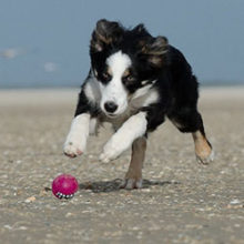 Socialize Your Dog For Outdoor Activities