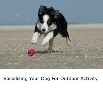 Socializing Your Dog For Outdoors Activities