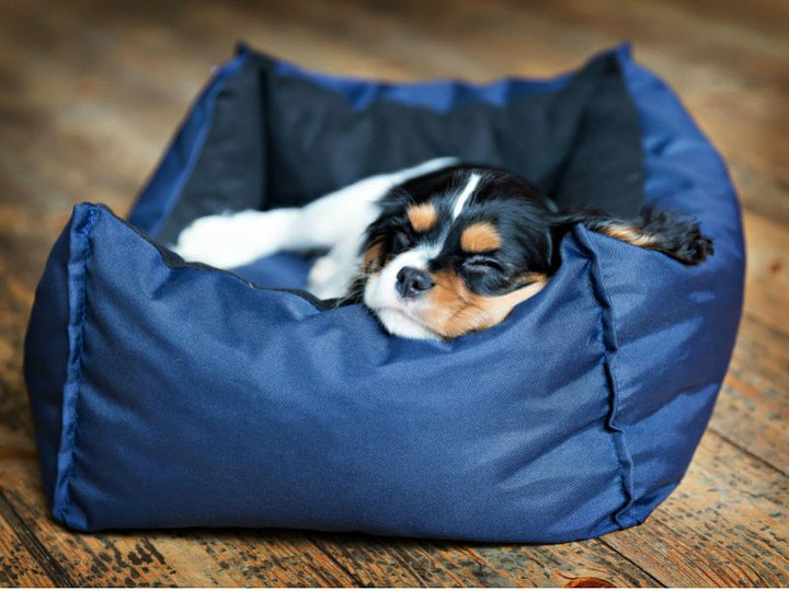Teaching Your Puppy House Rules