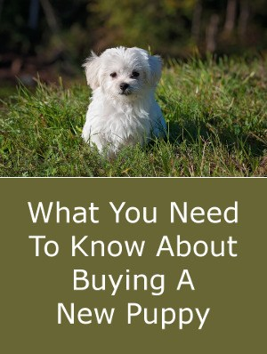 What You Need To Know About Buying A New Puppy