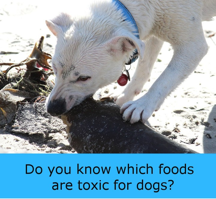 Some Food Is Toxic For Dogs