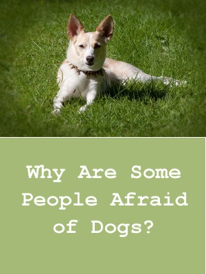 Why Are Some People Afraid Of Dogs?