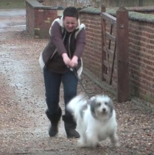 Teach Your Dog To Stop Pulling – A Step By Step Guide