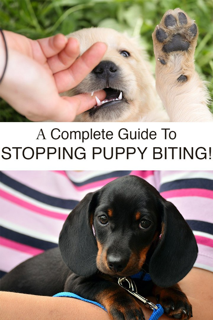 The Complete Guide To Stop Your Puppy Biting