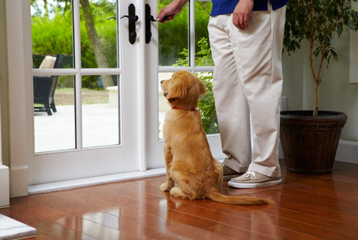 Top Tips For Toilet Training Your Puppy