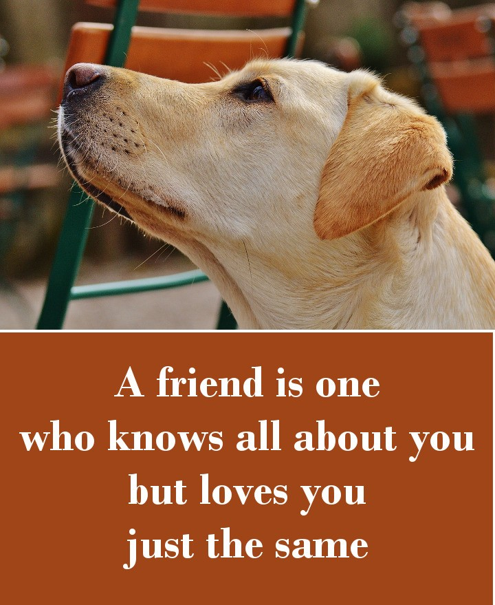 A friend is one who knows all about you but loves you just the same