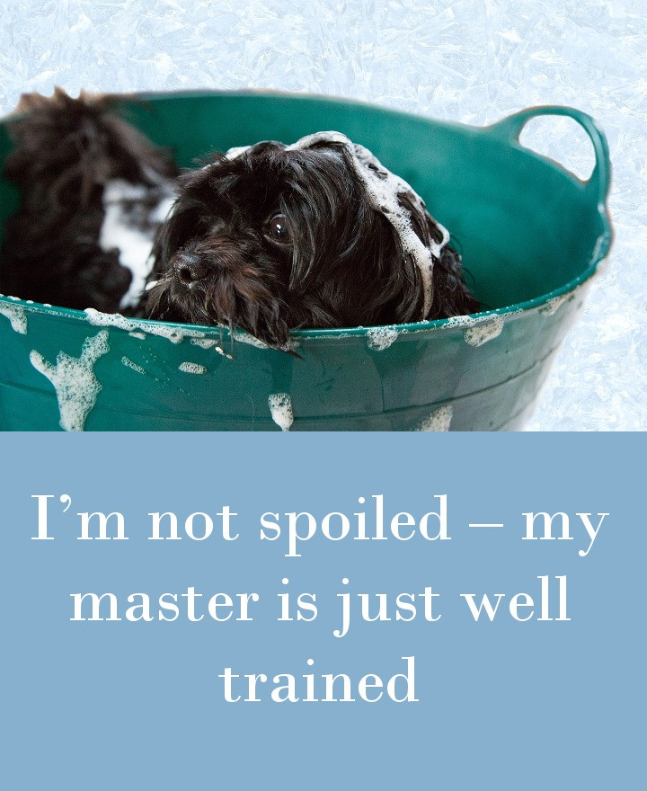 I'm not spoiled – my master is just well trained.