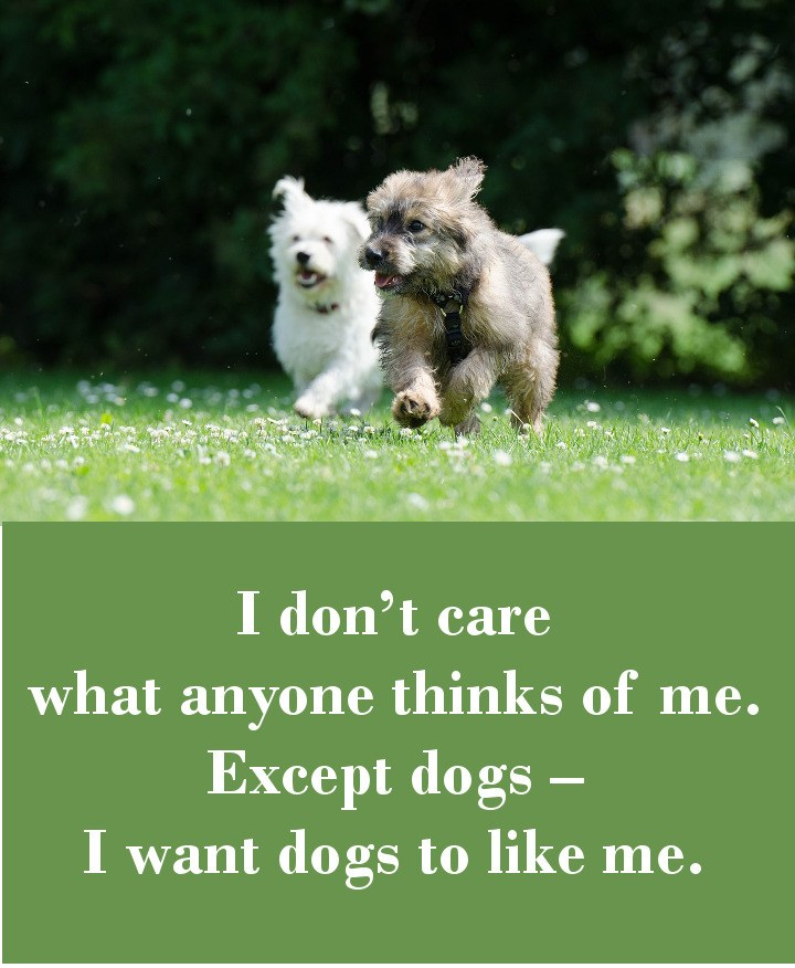 I don't care what anyone thinks of me. Except dogs – I want dogs to like me.
