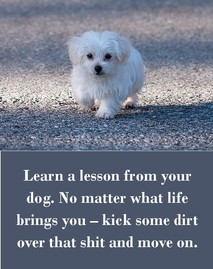 Learn a lesson from your dog. No matter what life brings you – kick some dirt over that shit and move on.