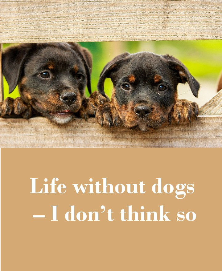 Life without dogs – I don't think so