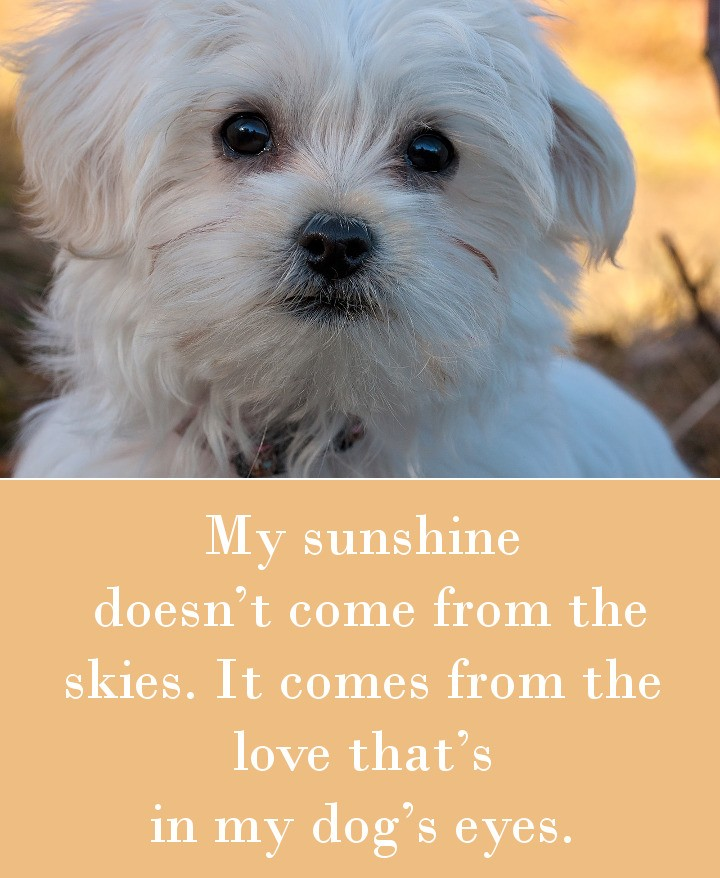 My sunshine doesn't come from the skies. It comes from the love that's in my dog's eyes.