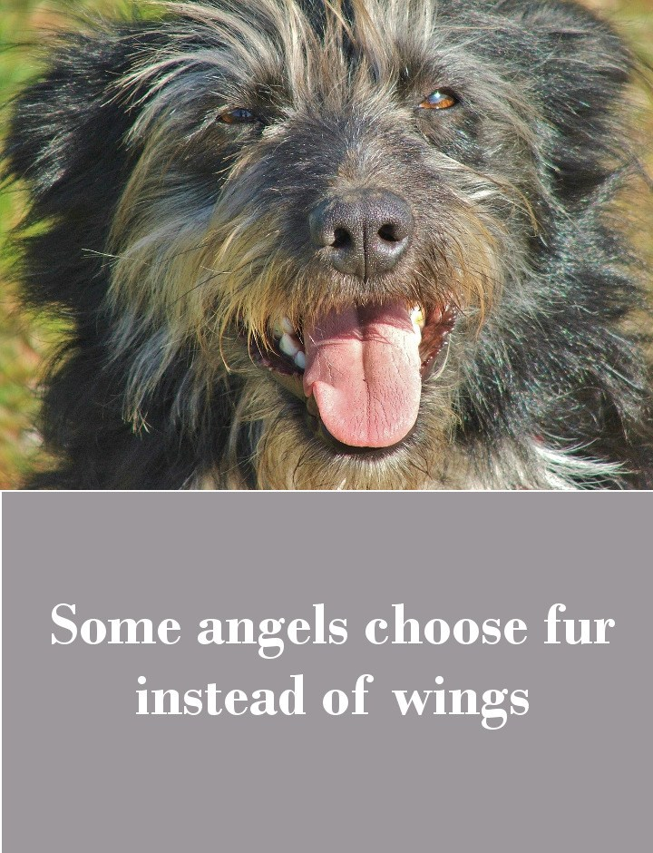 Some angels choose fur instead of wings