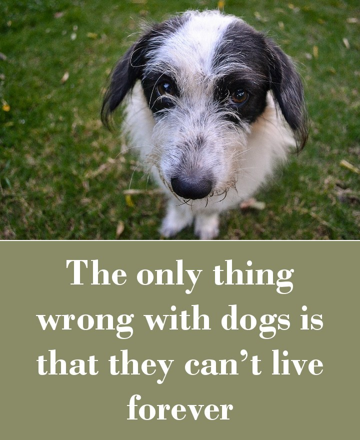 The only thing wrong with dogs is that they can't live forever