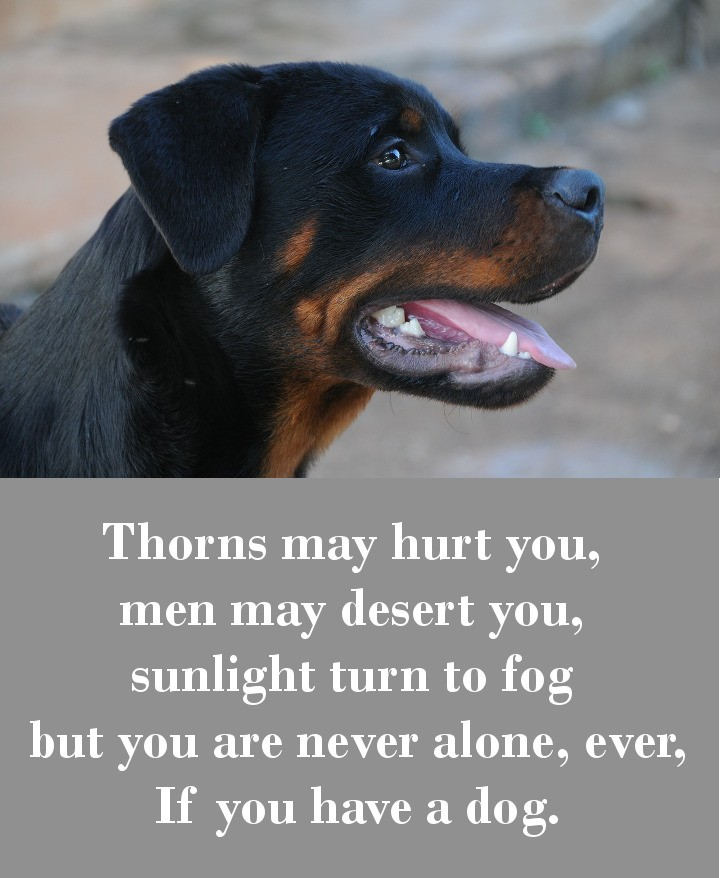 Thorns may hurt you, men may desert you, sunlight turn to fog but you are never alone, ever, If you have a dog.