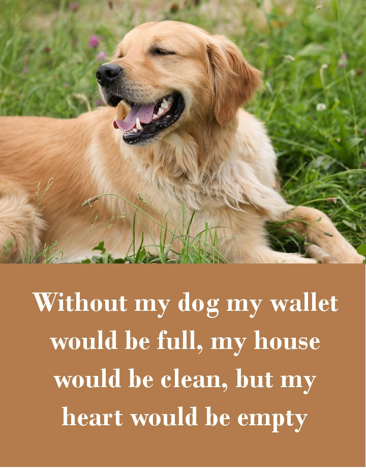Without my dog my wallet would be full, my house would be clean, but my heart would be empty.