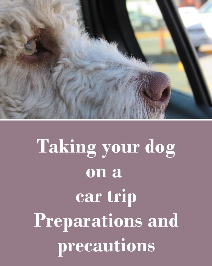 Taking Your Dog on a Car Trip - Preparations and Precautions