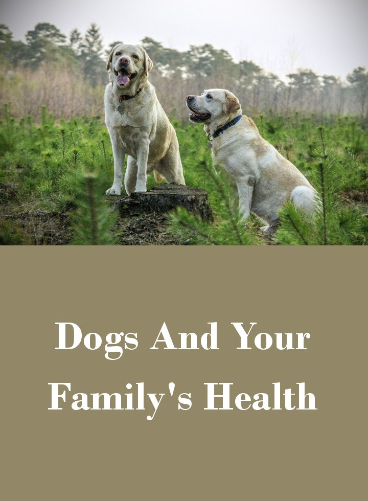 Dogs And Your Family's Health - Living With A Dog Can Bring Many Benefits