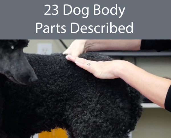 23 Dog Body Parts Described