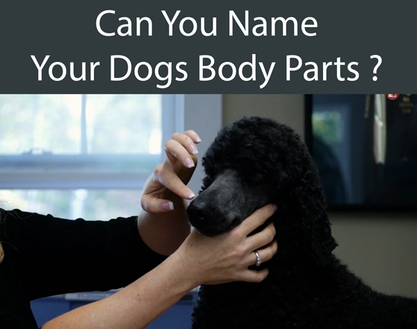 Can You Name Your Dogs Body Parts