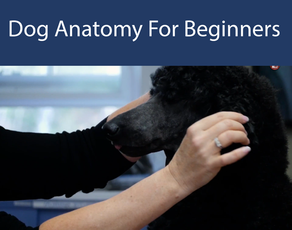 Dog Anatomy For Beginners