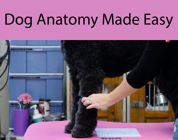 What Every Dog Owner Needs to Know About Dog Anatomy