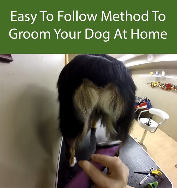 Easy To Follow Method To Groom Your Dog At Home