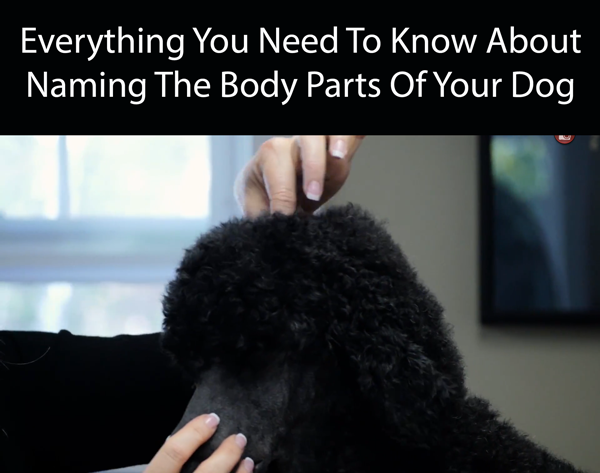 Everything You Need To Know About Naming The Body Parts Of Your Dog