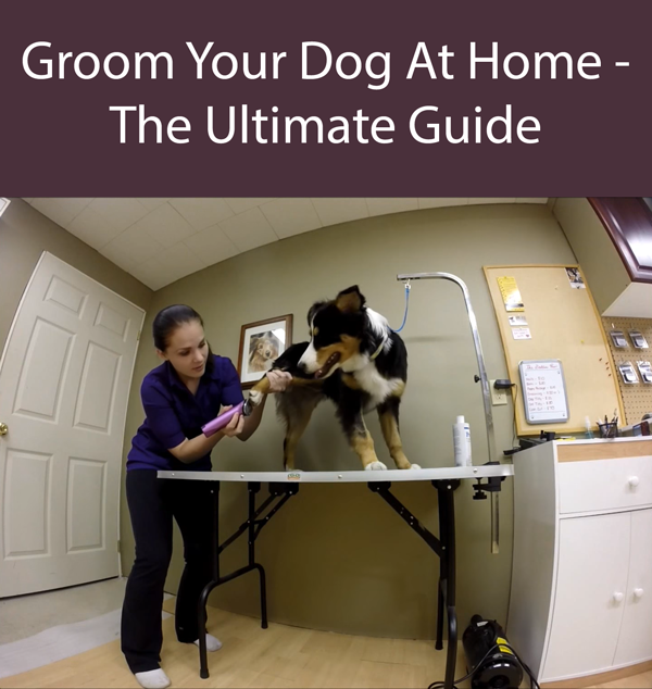 Groom Your Dog At Home - The Ultimate Guide