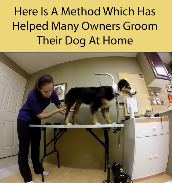 Here Is A Method Which Has Helped Many Owners Groom Their Dog At Home
