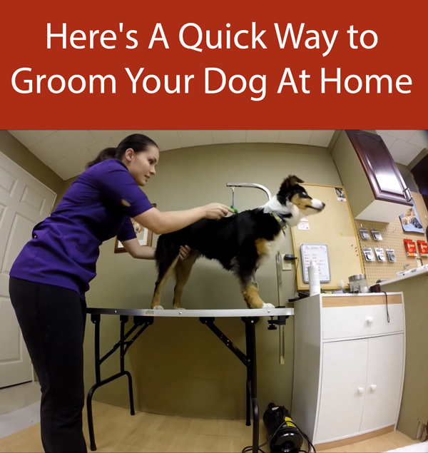 Here's A Quick Way to Groom Your Dog At Home