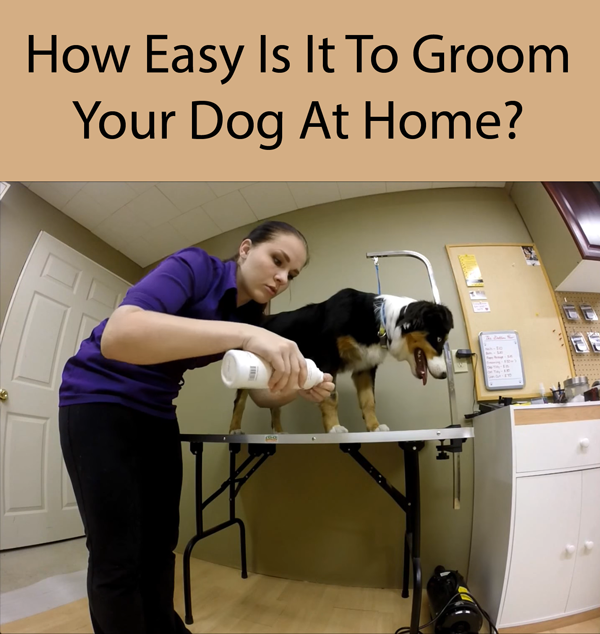How Easy Is It To Groom Your Dog At Home