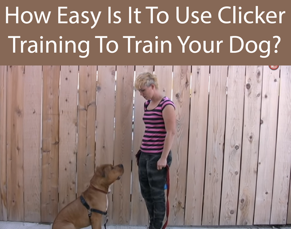 How Easy Is It To Use Clicker Training To Train Your Dog