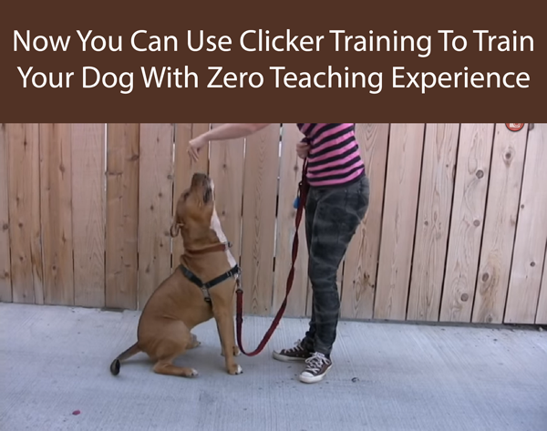Now You Can Use Clicker Training To Train Your Dog With Zero Teaching Experience
