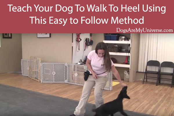 A Half Step Back Will Encourage Some Dogs To Move Behind You