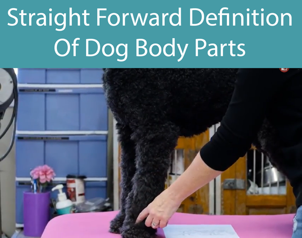 Straight Forward Definition Of Dog Body Parts