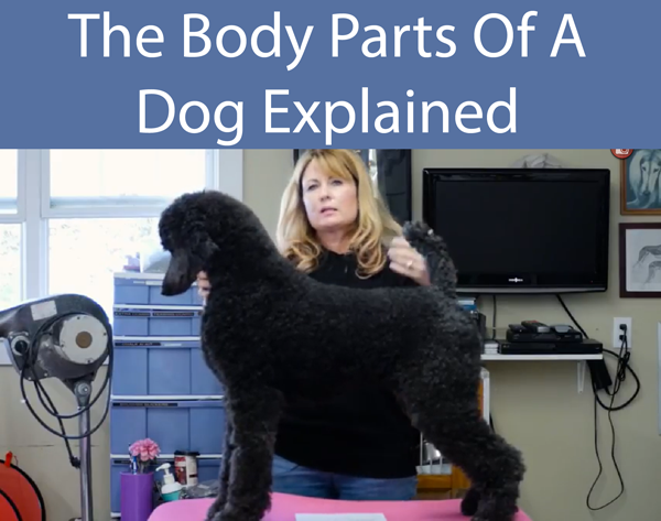 The Body Parts Of A Dog Explained