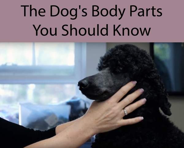 The Dogs Body Parts You Should Know
