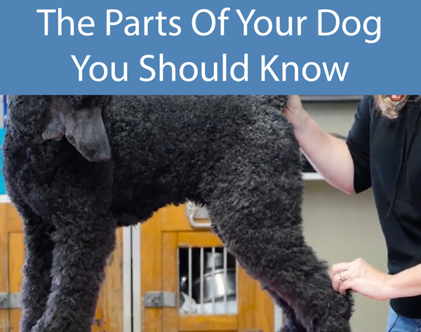The Parts Of Your Dog You Should Know